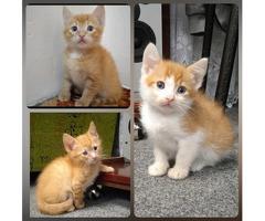 Отдадим 3 рыженьких котенка