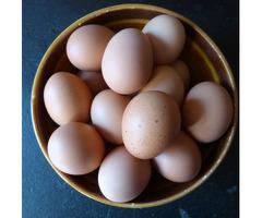Продам свежее домашнее яйцо