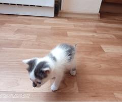 Продам новорожденного котёнка